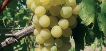 Savoir où acheter son vin et comment : vente-de-vin.com